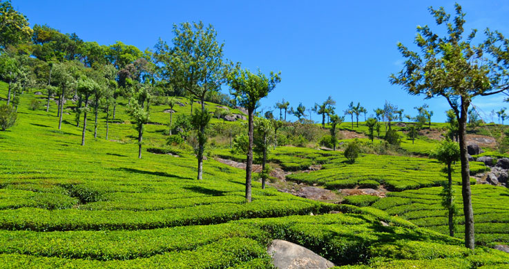 munnar tea coffee palace