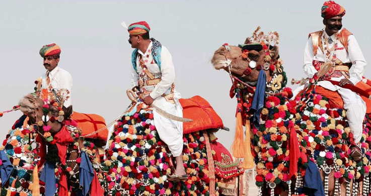 camel rajjasthan