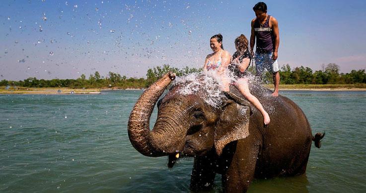 chitwan elephant