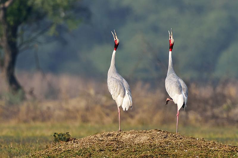 keoladev ghana bird sanctuary