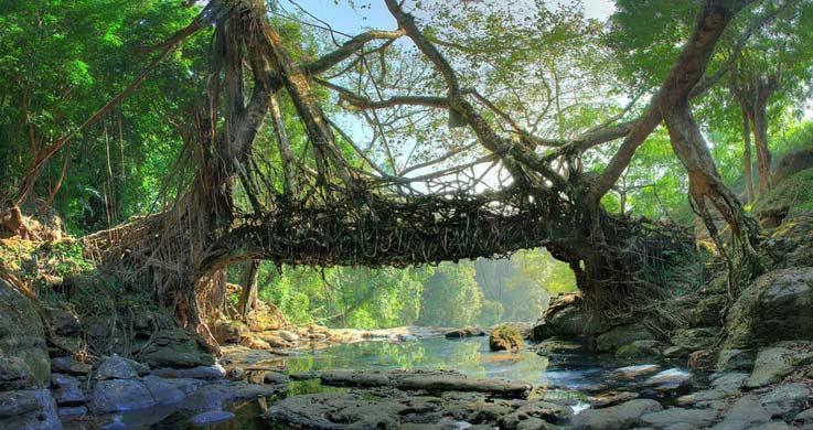living root village