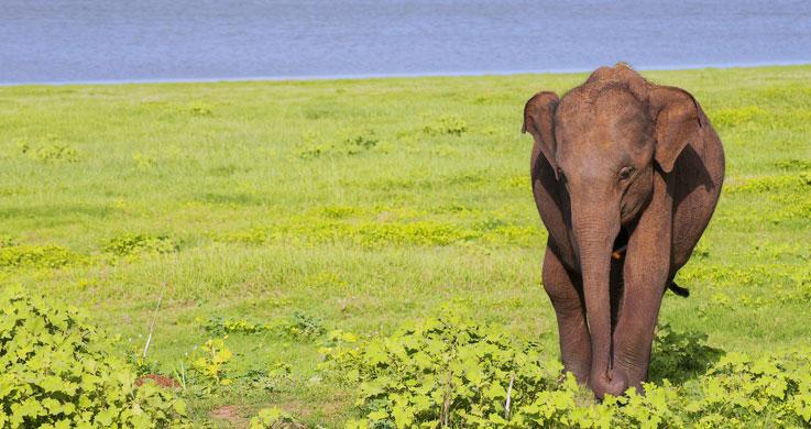 preriyar elephant