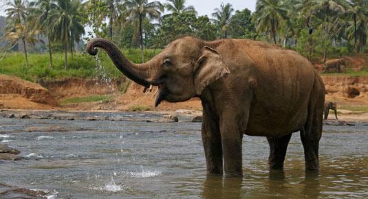 elephant in preriyar