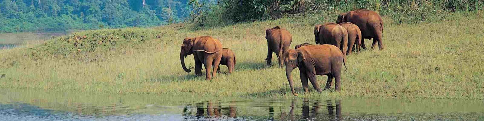 Elephant in priyar national park