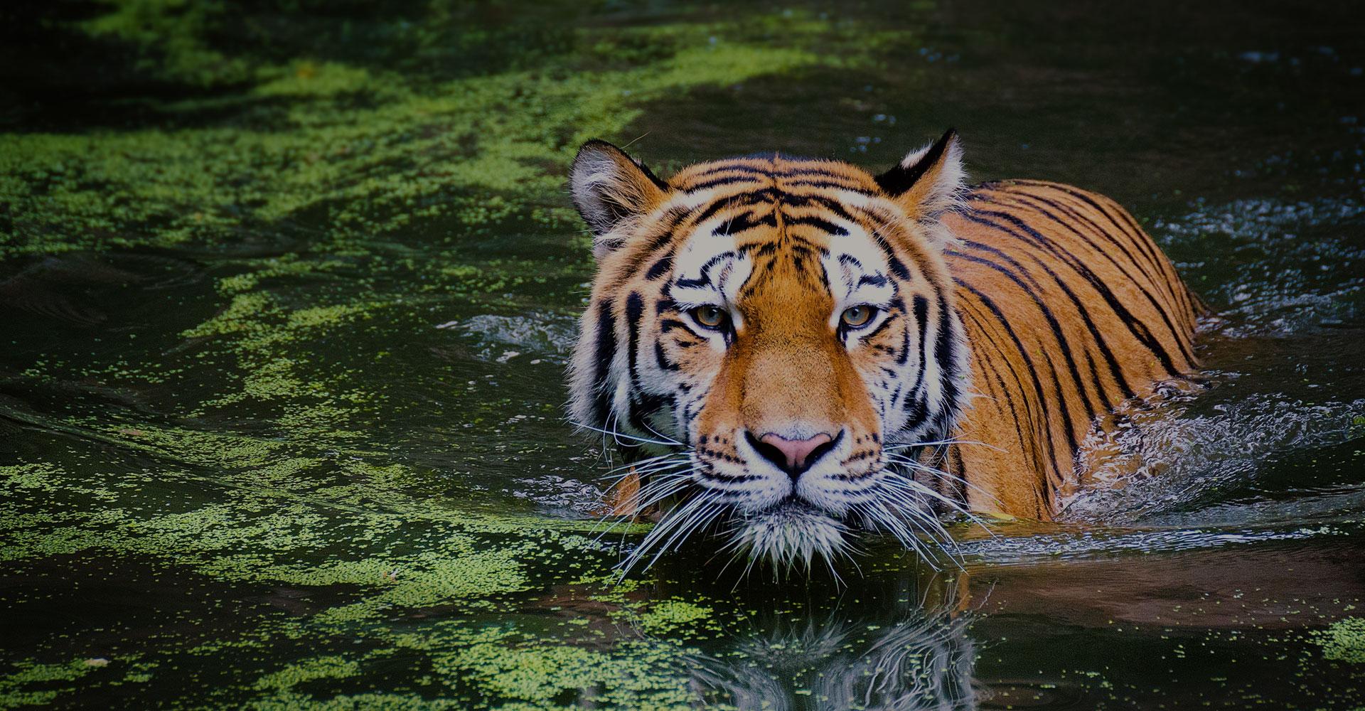 Best indian wildlife tour