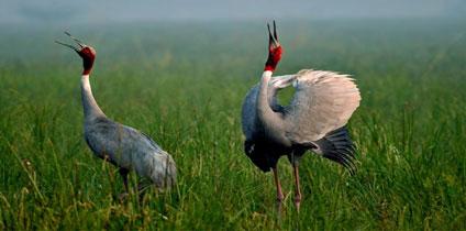 Wildlife In Keoladev Ghana National Park, Bharatpur With Rajasthan local guide