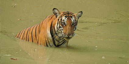 Ranthambore National Park, Sawai Madhopur With best tour guide of Rajasthan tourism