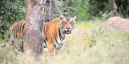 Sariska Tiger Reserve In Rajasthan Tourism and tourist guide