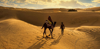 Camel Breeding Bikaner With Rajasthan Travel Guide