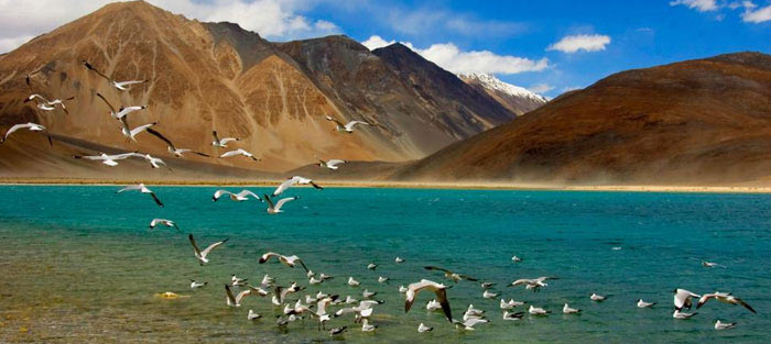 Kashmir and Leh Tours