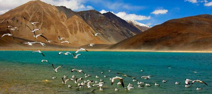 Kashmir and Leh Tours