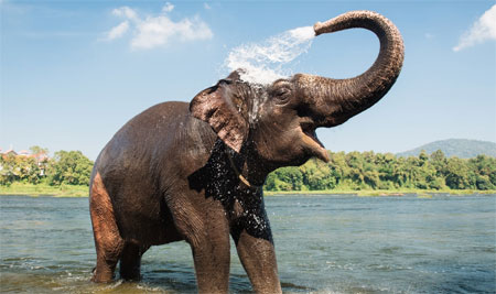 Kochi Visit Elephant Santuary