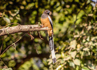India Ranthambore National-Park bird