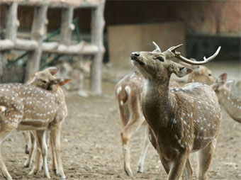 Zoo tourist attractions in Jaipur