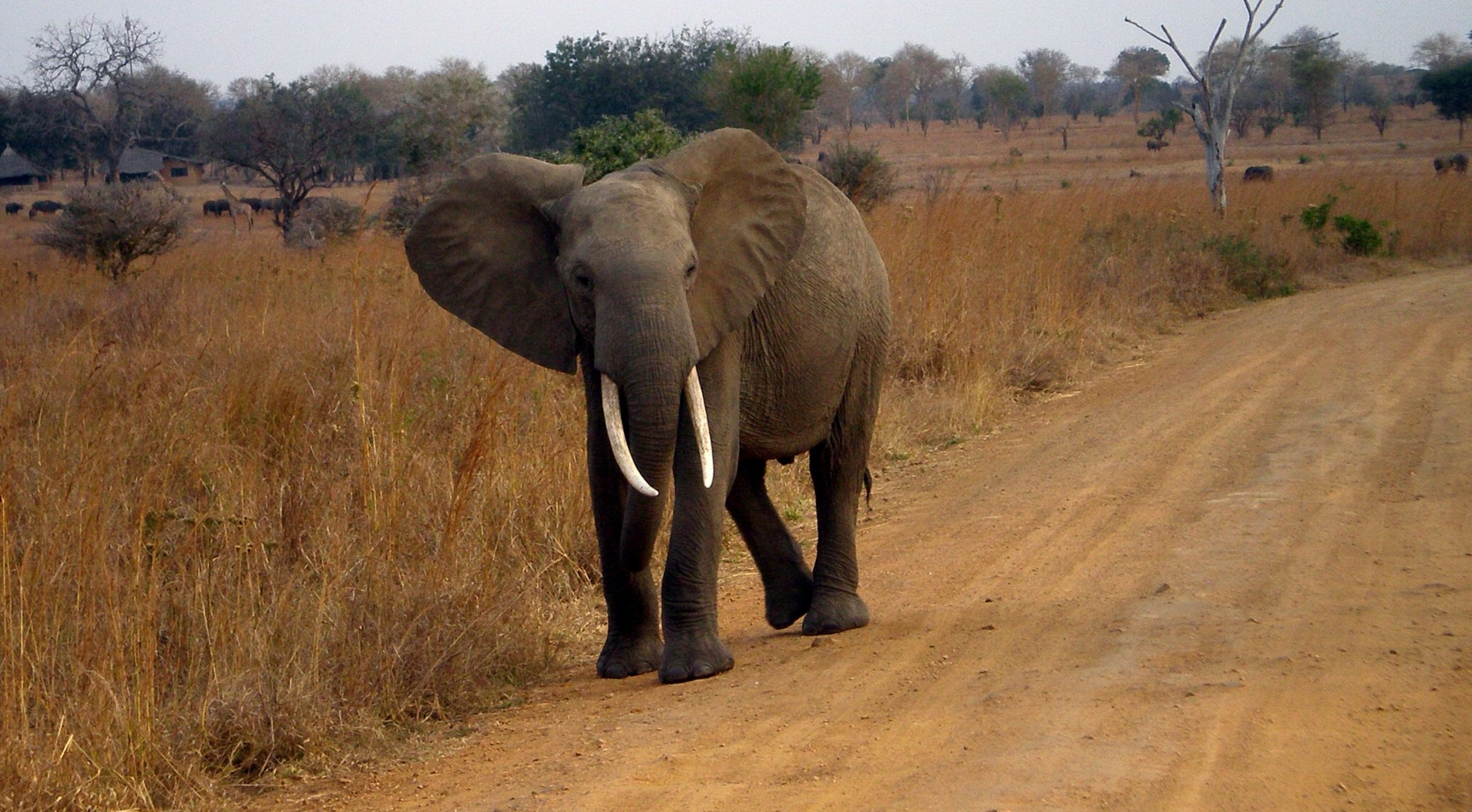 Elephant in Satpura National Park