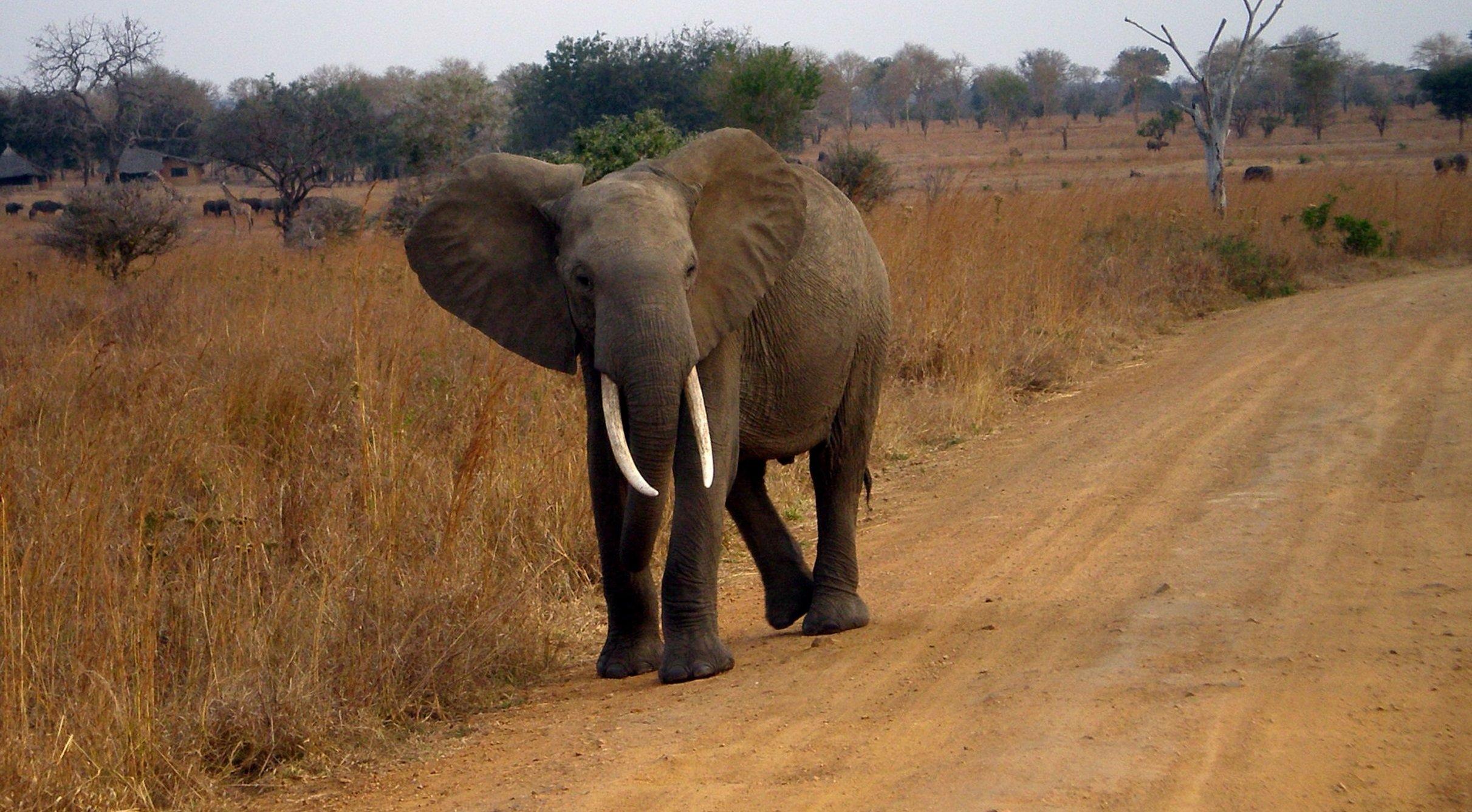 Elephant in Satpura National Park