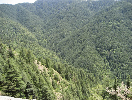 green Valley in Shimla