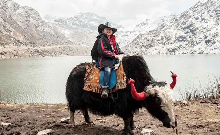 yak safari in gangtok