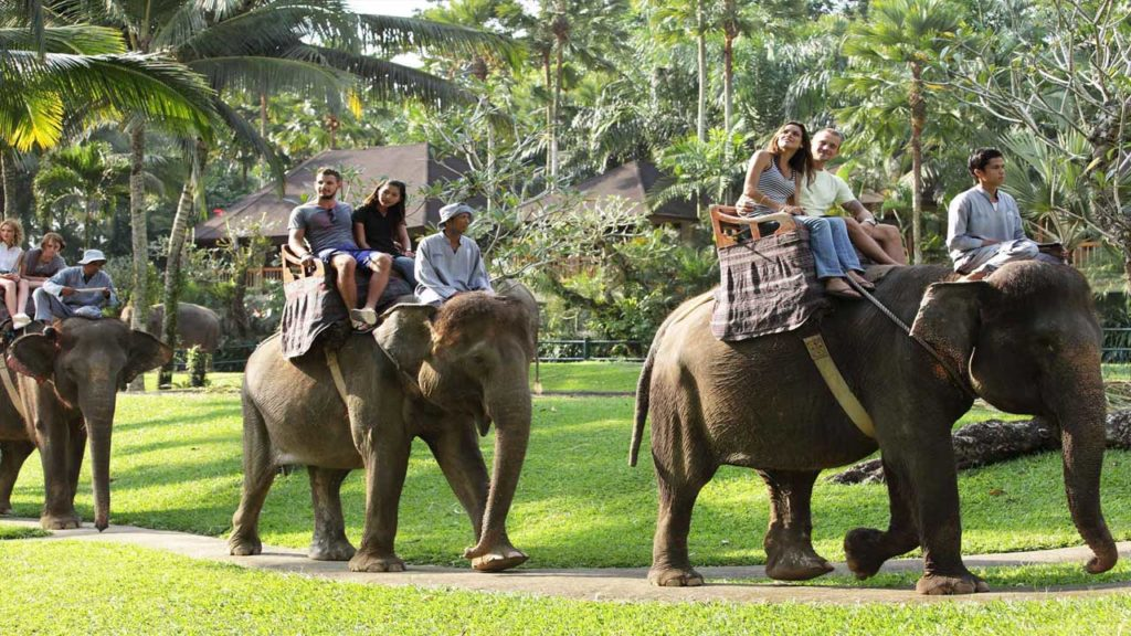 Corbett National Park Elephant safari trip to corbett