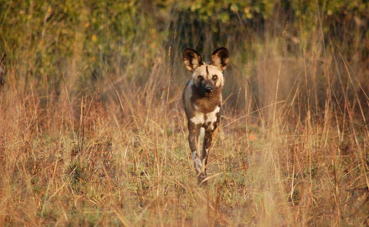 Interesting Activities in Cobertt National park in safari trip to corbett