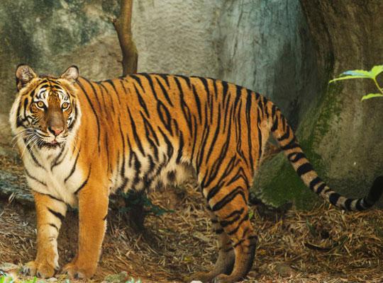 Benog Wildlife Sanctuary in mussoorie