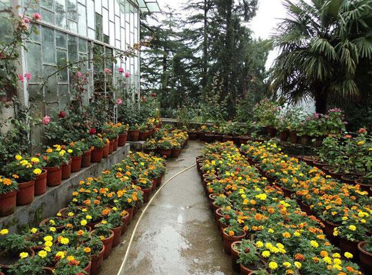 Company Garden in Mussoorie